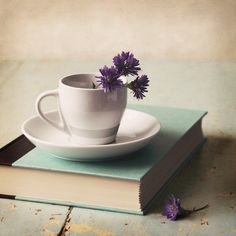 I like this shot by the simplicity of the image. The book and the plant are placed well and the image gives a relaxing feel about it.