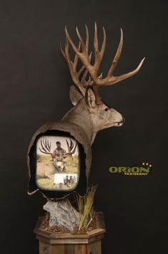 Custom hunting picture on the back of this Muledeer pedestal The Effective Pictures We Offer You Abo Deer Hunting Decor, Deer Head Decor, Taxidermy Decor, Taxidermy Display, Deer Skull Art, Deer Skulls, Deer Mount Decor, Deer Mounts, Fish Mounts