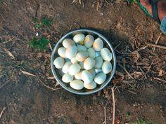 Egg Cooking Recipes, Eggs, Breakfast, Food, Morning Coffee, Chef Recipes, Essen, Egg, Eten