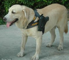 http://www.dailymail.co.uk/news/article-2282445/Police-Thailand-use-dogs-guns-strapped-sides-guard-hotel.html