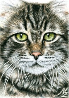 "Saatchi Art Artist: Nicole Zeug; Pencil 2013 Drawing ""Cats Face"""