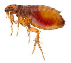 Protect your pets from fleas!!!