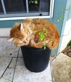 Springtime is an ideal season for cat plants. 21 Very Important Cat Plants I Love Cats, Cute Cats, Funny Cats, Crazy Cat Lady, Crazy Cats, Kittens Cutest, Cats And Kittens, Cat Plants, Photo Chat