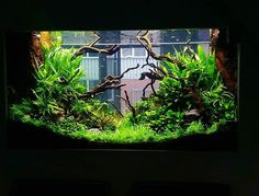 Aquaflora home's planted tank - 120x80x90h cm Azalea wood and mixed green…