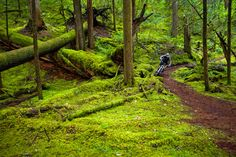 """The McKenzie River trail has been listed over and over in """"top 10 must ride"""" lists. There is a very good reason for that. However, when we rode it we did not see a single person anywhere on it. Weird..."""
