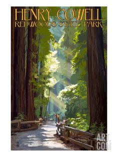 Henry Cowell Redwoods State Park - Pathway in Trees Art Print by Lantern Press at Art.com
