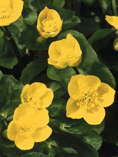 For moist to wet areas of your landscape, choose from among these beautiful plants: they love having wet feet.