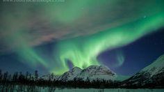 Auroras boreales avistamiento de ballenas y fiordos las joyas de Noruega