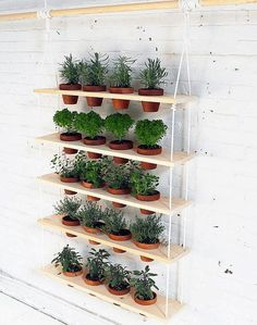 Indoor Herb Garden | Gardening Tips And Tricks To Become A Successful Homesteader