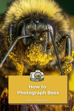 Learn how to take photos of bees with this macro and close-up nature photography tutorial. Bee photo tips for you! Wildlife Photography Tips, Photography Basics, Photography Tips For Beginners, Photography Tutorials, Nature Photography, Take Better Photos, How To Take Photos, Cool Pictures, Cool Photos