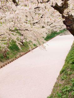 Twitter / HIROSAKIPARK_JP: 弘前公園・弘前城の絶景「桜の絨毯・花筏(はないかだ)」だけ集 ...