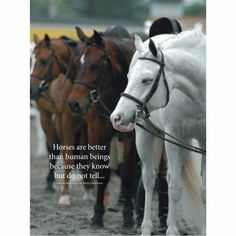 Equestrian Quotes and Sayings | horse quotes/sayings