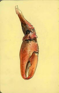 Crawdad claw (or crayfish, crawfish). Watercolor and pencil on paper.