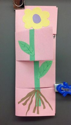 Plant part foldable~~ inside write the plant part and its function. Plant part foldable~~ inside wri First Grade Science, Kindergarten Science, Science Classroom, Teaching Science, Science Activities, Parts Of A Flower, Parts Of A Plant, Plant Science, Diy Projects For Beginners