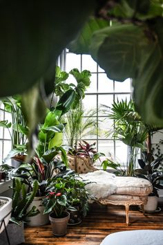 Un appartement jungle – PLANETE DECO a homes world The filmmaker and producer Hilton Carter lives in Baltimore with his partner, in an apartment where plants have invaded space so much, it almost feels like you are … Interior Garden, Interior And Exterior, Asian Interior, Interior Design Plants, Stylish Interior, Japanese Interior, Bohemian Interior, Interior Modern, Kitchen Interior