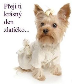 I wish beautiful morning . Beautiful Morning, Funny, Cute Dogs, Teddy Bear, Yorkies, Fasion, Google, Pet Clothes, Factory Farming