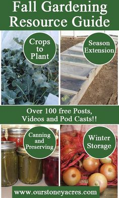 Use this Fall Gardening Resource Guide to learn more about everything you need to be doing for and in your vegetable garden this fall. Winter Vegetables, Organic Vegetables, Growing Vegetables, Growing Tomatoes, Hydroponic Gardening, Hydroponics, Vegetable Gardening, Veggie Gardens, Aquaponics Fish