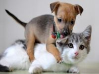 'Hayvanlar Aleminde Toplu Taşıma'