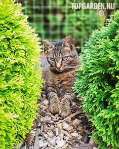 #kitty #cica #macska #kitten #gardening #kertépítés #topgarden #kerttervezés 🐈 Kitty, Animals, Instagram, Little Kitty, Animales, Animaux, Kitty Cats, Animal, Kitten