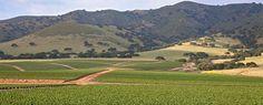 Strawberry fields, Salinas Valley, California
