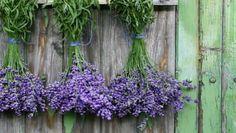 Zavonia levanduľa aj u vás? Na jej pestovanie nemusíte mať záhradu