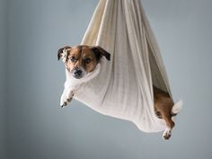 Photographer Stages Shoot with Couple's Dog Instead of Newborn| Around the Web, Real People Stories