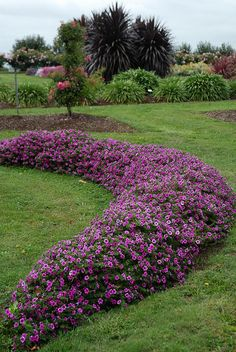 """Soleil Petunias are a new purple petunia that's so extremely drought-tolerant, it's said to """"live off a glass of water. It actually flowers more when it's stressed by a lack of water!"""