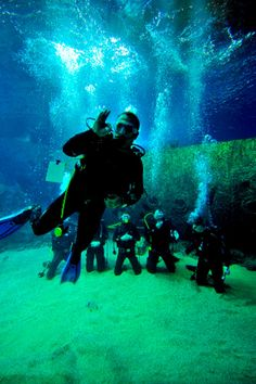 Scuba Diving @Turkuazoo Akvaryum aquarium