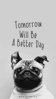 Tomorrow Will Be A Better Day Pug Face iPhone 6 Plus HD Wallpaper
