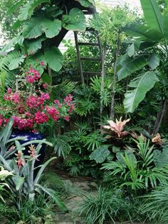 There is a huge range of widely available, often subtropical, large-leaved plants that can be grown easily outside in summer. In complete contrast to the archetypal English garden, flowers are out, and dramatic, jungly leaf shapes are in.