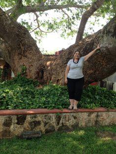 Árbol gigantesco de Bacalar Quintana Roo