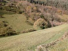 Resultado de imagen de bosque autoctono Gallego