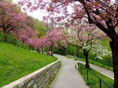 L1000840 Graz Austria, Sidewalk, Places, Beautiful Places, Pictures, Side Walkway, Walkway, Walkways, Lugares