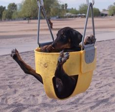Puppies In Swings Is The Most Adorable Thing You'll See Today