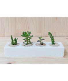 Cacti Blanco - Matera. $55.000 COP. Encuentra más materas, floreros y plantas ornamentales en https://www.dekosas.com/floreros-plantas-ornamentales