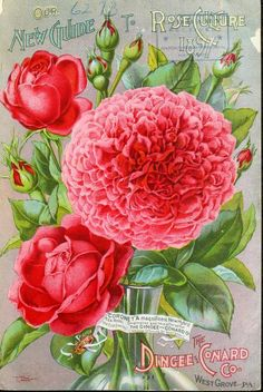 1897 - Our new guide to rose culture : - Biodiversity Heritage Library