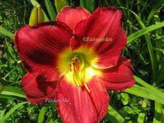 Pardon Me Daylily Front Yard Patio, Very Beautiful Flowers, Garden Tool Organization, Day Lilies, Go Outside, Different Colors, Garden Design, Home And Garden, Bloom