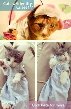 Silly cats, why can't you just stick to being cats? Here are some more kitties w/identity crises!