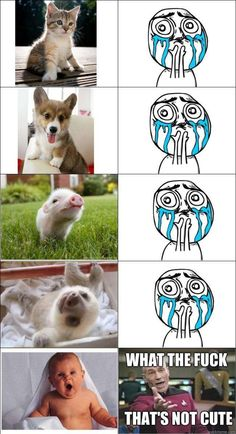 LMAO...awww..poor human...it's all hairless and loud