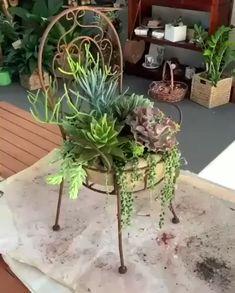 Succulent Gardening, Succulent Terrarium, Planting Succulents, Planting Flowers, Succulent Display, Succulent Arrangements, Succulent Garden Ideas, Container Plants, Container Gardening