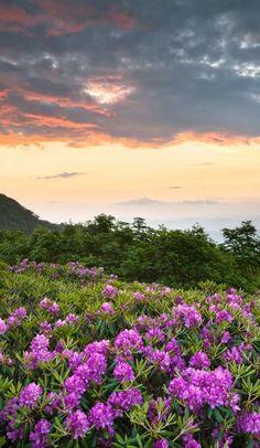 Ultimate Road Trip: The Appalachian Trail