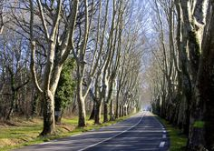 A road near Remy, France - it's not unusual to have these stands of trees along highways in this part of France.
