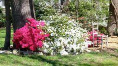 Descubrí cuales son las plantas más indicadas para cultivar durante las épocas  frías y además aprendé algunos consejos para elegir las especies que mejor se adaptan en esta época del año y que aportan el color y luminosidad necesaria para hacer lucir nuestro jardín tan vivo como en primavera.