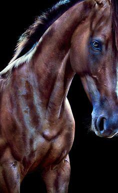 """""""Wild Horses."""" Photographer Andrew McGibbon"""