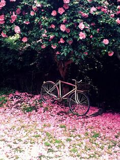 I see this enchanting place and think of it as somewhere my daughter rode her bike to read a romantic novel and think about how one day love will shower her like raining flower petals. She's on a blanket nearby with her book completely unaware that she is so special.