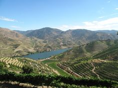 Douro 2012 Reds & 2013 Whites plus, a decade on, 2005 Douro Reds - via The Wine Detective 02.04.2015 | The universally acclaimed, charismatic 2011 vintage is a tough act to follow.  Yet there are some great Douro reds in 2012, especially for those who admire elegance and freshness and/or who have neither the desire, patience or facilities to stash away wine for the long haul.  The best are beguiling, broachable reds of detail well worthy of your attention, while 2013 Douro Whites are…