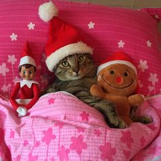 Funny kitty sleeping with toys on the bed and waiting for Santa to give him his presents on Christmas Day.