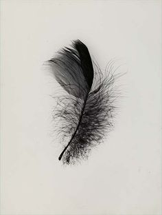 Feather  by RasMarley, via Flickr