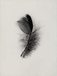 Feather  by RasMarley, via Flickr