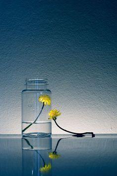 ♂ Still life photography yellow flower glass